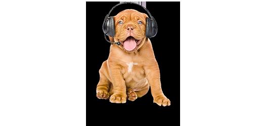 Hund med headset